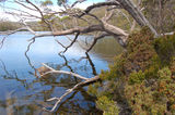 Picture relating to Mount Field National Park - titled 'Mount Field National Park'