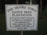 Picture relating to Moore - titled 'Moore - native tree plantation'