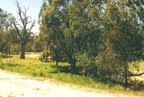 Picture relating to Mooroopna Murchison Road - titled 'Mooroopna Murchison Road'