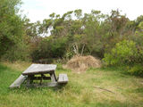 Picture relating to Darkes Forest - titled 'Maddens Creek Picnic Area'